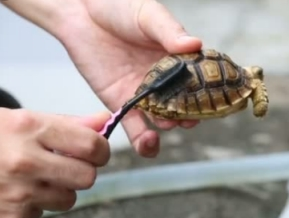 turtle_cleaning 1